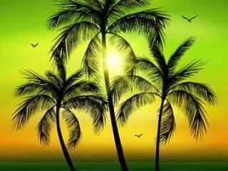 棕榈树剪影。棕榈树在夏天背景离开