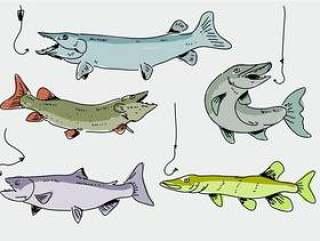 Muskie鱼手绘涂鸦矢量图