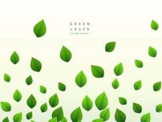 生态绿色叶子漂浮在白色背景上