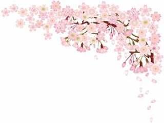 樱花樱花春天花入学仪式毕业典礼节日节日假期