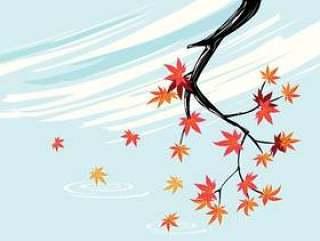 光滑的日本枫树植物与天空背景和秋天枫叶
