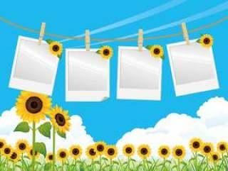 蓝蓝的天空和夏天的花,向日葵宝丽摄影风景
