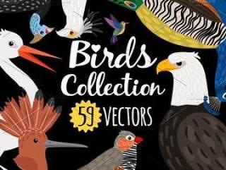 59种鸟类猫头鹰火烈鸟老鹰手绘插画T恤图案印刷eps矢量素材 Big set of Different Birds