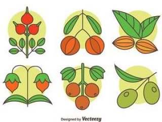 草本植物集合矢量