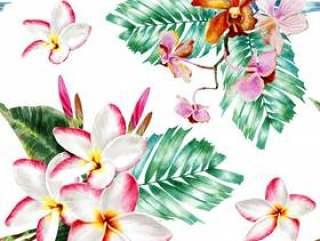 水彩的无缝模式兰花和鸡蛋花的花朵。