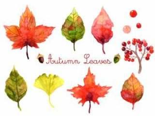 秋天的植物插图集