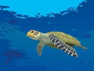 在海的乌龟