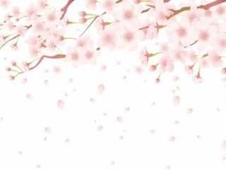 樱桃树框架201706