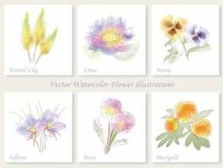 水彩风格六种花卉插图集1