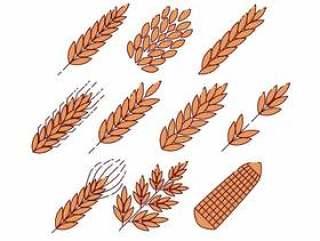 谷物植物图标矢量