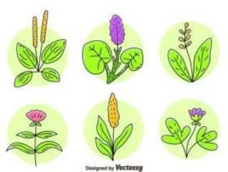 草本植物花卉矢量