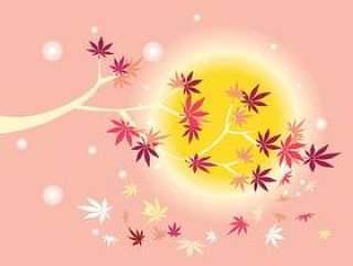 光滑的日本枫树植物与太阳背景和秋天枫叶叶子