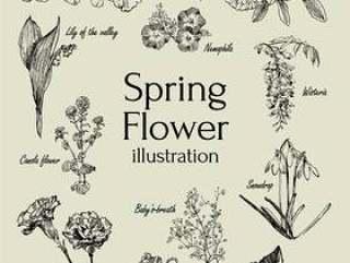 春天的花朵插图