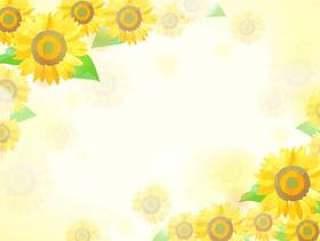 柔和的颜色向日葵背景1