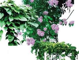 藤类植物psd素材