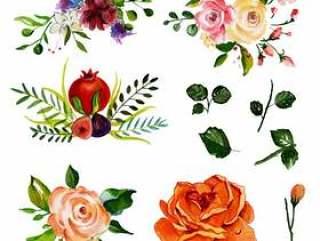 美丽的水彩花卉元素集合