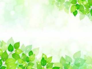 新鲜的绿色272