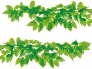 叶绿色绿色植物自然框架框架背景
