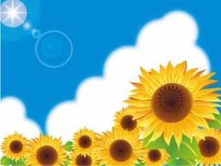 蓝蓝的天空和太阳和向日葵领域