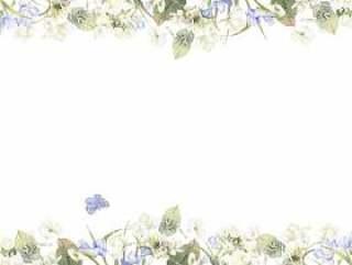花框架222 - 白色绣球花和小苍兰