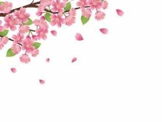 春天现实的樱桃树枝材料花·插图03