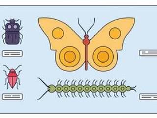 研究昆虫矢量