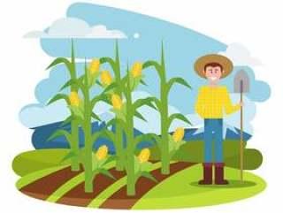玉米秸秆插图