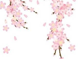 樱花花瓣和分支机构的A4大小