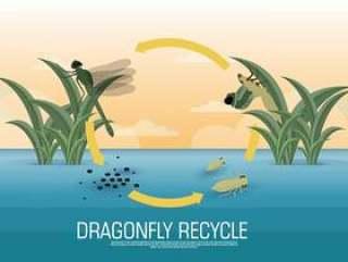蜻蜓生命周期矢量图
