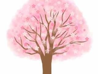 樱桃树(盛开)
