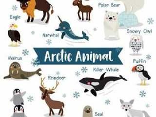 与动物名字的北极动物动画片
