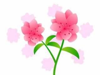美丽的杜鹃花鲜花载体