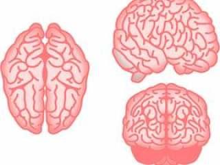 大脑设置柔和的颜色