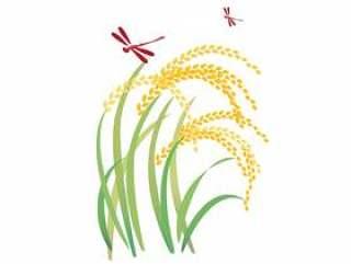 红蜻蜓和耳朵大米