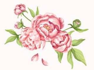 手拉的桃红色牡丹花例证