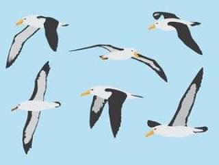 信天翁鸟飞行集合