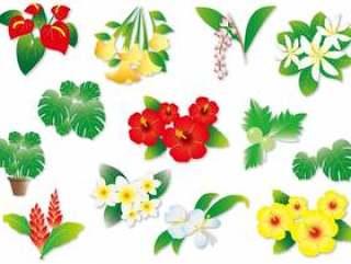在夏威夷的各种植物