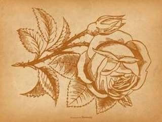 复古玫瑰背景
