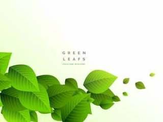 新鲜的绿色叶子分支成长背景