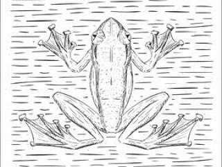 手绘矢量青蛙插画