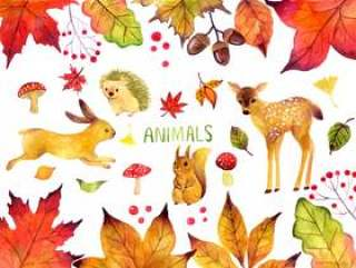 秋季动物插图集