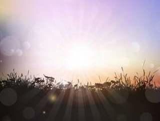 草和植物对夕阳的天空的轮廓