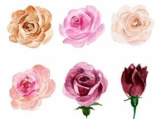 美丽的水彩花卉和叶子元素集合