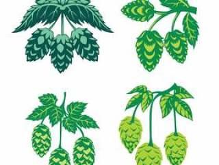 绿色蛇麻草植物,素描风格矢量图孤立在白色背景上。成熟的绿色跳跃的锥体,啤酒酿造成分
