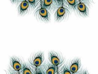 在被隔绝的背景的孔雀羽毛