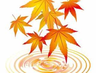 枫叶秋天的树叶帧框架装饰框架透明装饰背景图片