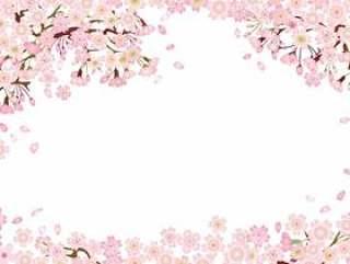 樱花樱花樱花春天花入学仪式毕业典礼Ohanami背景