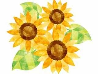 向日葵三个轮子