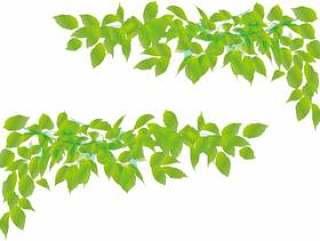叶绿色帧框架装饰框架新鲜绿色年轻叶子