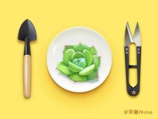 多肉植物PSD
